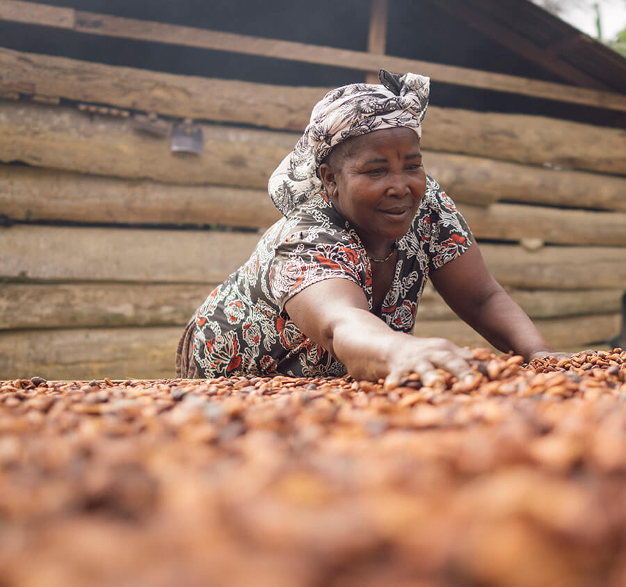 Woman spreading cacao