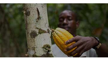 Cocoa Sustainability Strategy