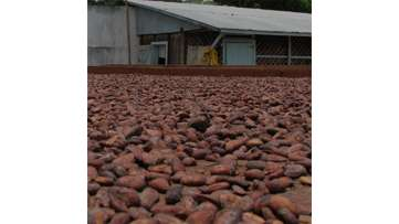 Mexico Cocoa Project